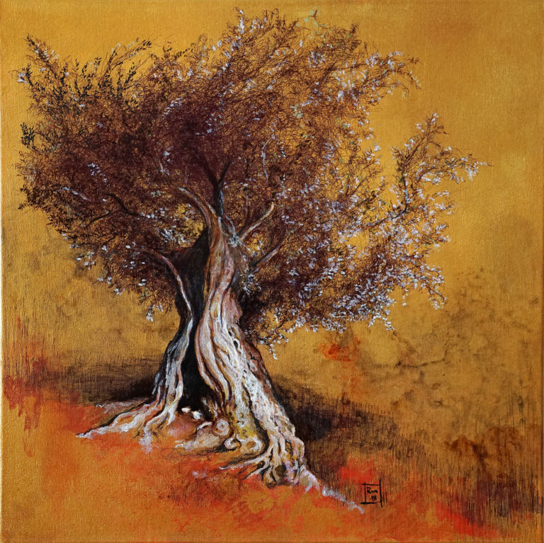 L'ulivo secolare / The ancient olive tree