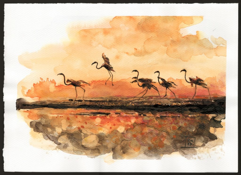 Fenicotteri - acquerello su carta /Flamingos - watercolor on paper 25x35 cm.